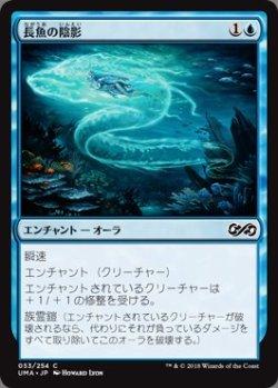 画像1: 長魚の陰影(日本語版・通常)